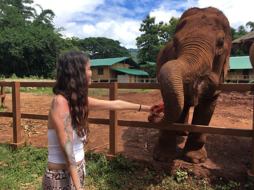 PHOTO FEEDING ELEPHANTS