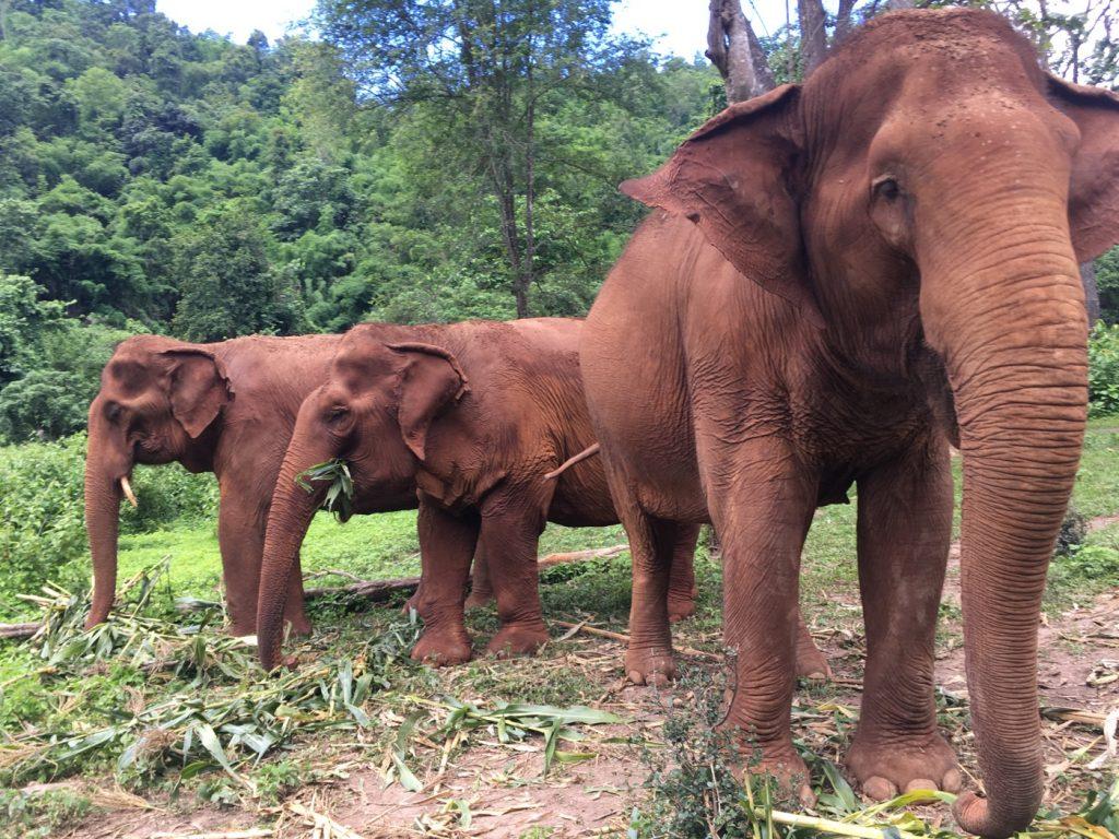 PHOTO OF 3 ELEPHANTS